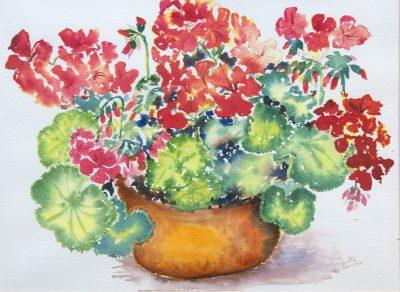 Geranuims - 38x27cm - Watercolor